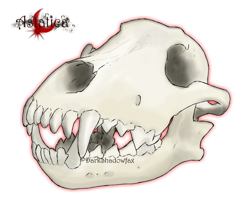 Wolf skull clipart png vector transparent library Snout Jaw Mouth Skull Cartoon - Wolf skull png download ... vector transparent library