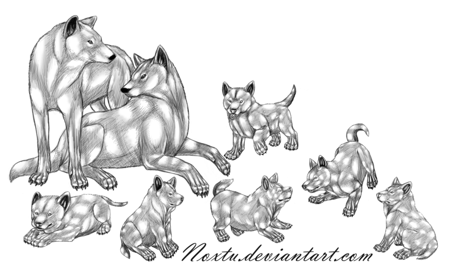 Wolves familys clipart library 14 Wolf drawing family for free download on Ayoqq cliparts library