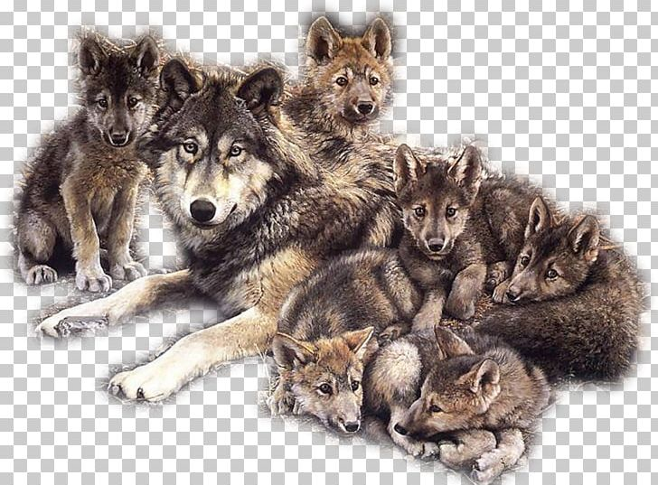 Wolves familys clipart clip royalty free download Dog Puppy Coyote Pack Indian Wolf PNG, Clipart, Animal ... clip royalty free download
