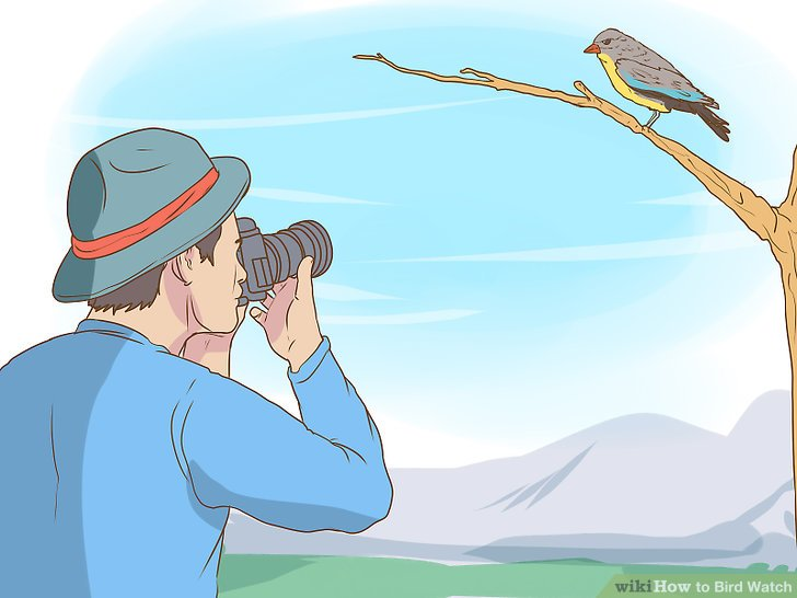 Woman bird watcher clipart image transparent download Bird Watching Clipart (104+ images in Collection) Page 1 image transparent download