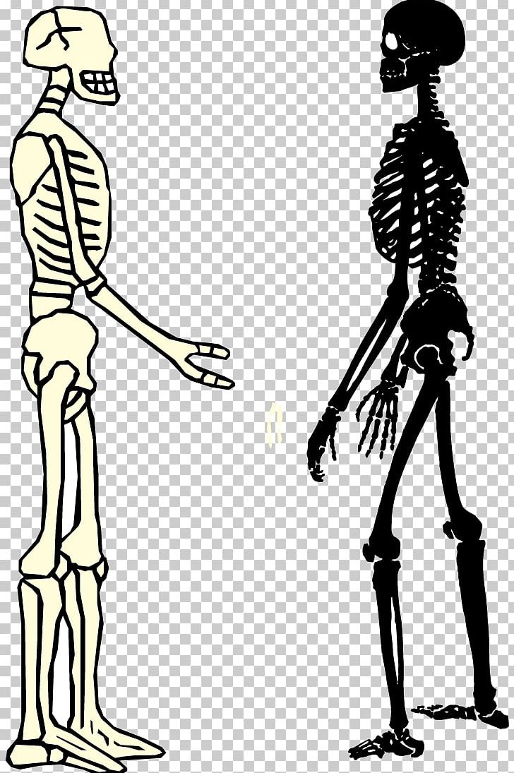 Woman skeleton with hair clipart png transparent library Human Skeleton Homo Sapiens Bone PNG, Clipart, Anatomy, Art ... png transparent library