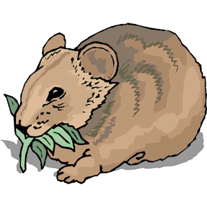 Wombat pictures clipart svg free stock Wombat clipart, cliparts of Wombat free download (wmf, eps ... svg free stock