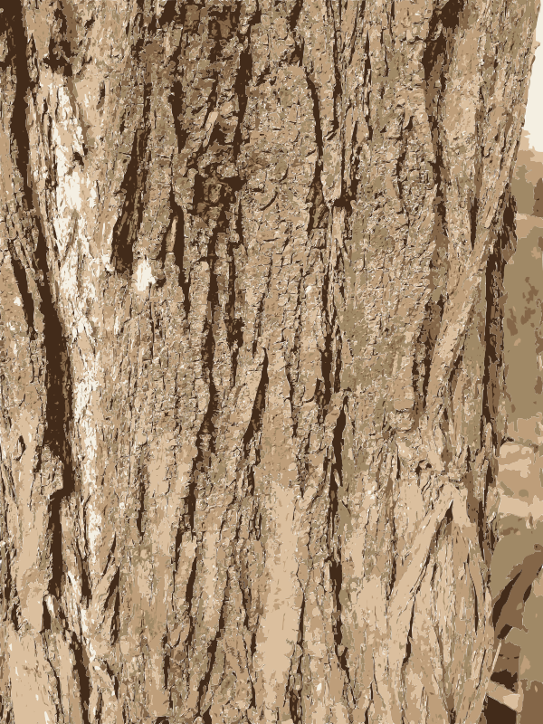 Wood bark clipart picture freeuse Free Clipart: Tree bark texture   rejon picture freeuse