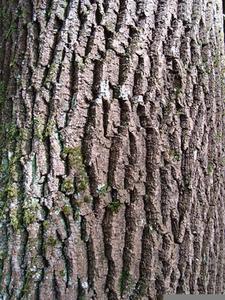 Wood bark clipart vector Tree Bark Clipart   Free Images at Clker.com - vector clip ... vector