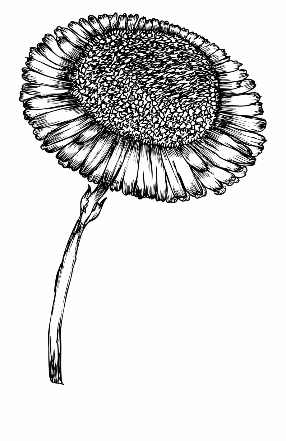 Wood print clipart jpg free stock Sunflower Bw Clip Design Wood Print Wood Print, Laser - Hand ... jpg free stock