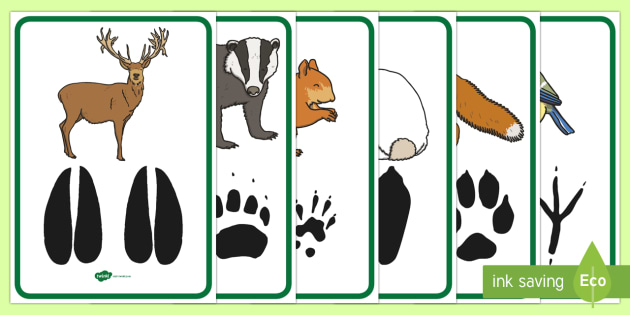 Woodland animal footprint clipart free library Woodland Animal Footprints Poster Pack - forest, animals ... free library