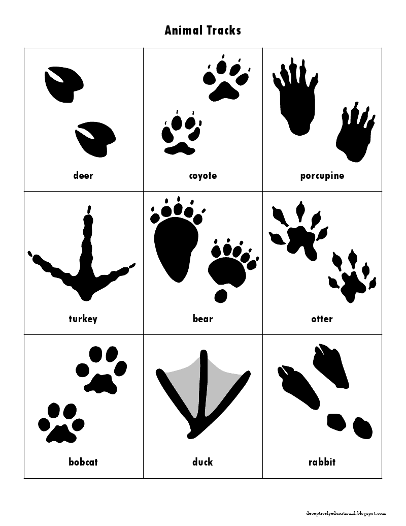 Wildlife tracks clipart jpg free stock Animal Track Cards.pdf | Resources for Teaching Art | Animal ... jpg free stock