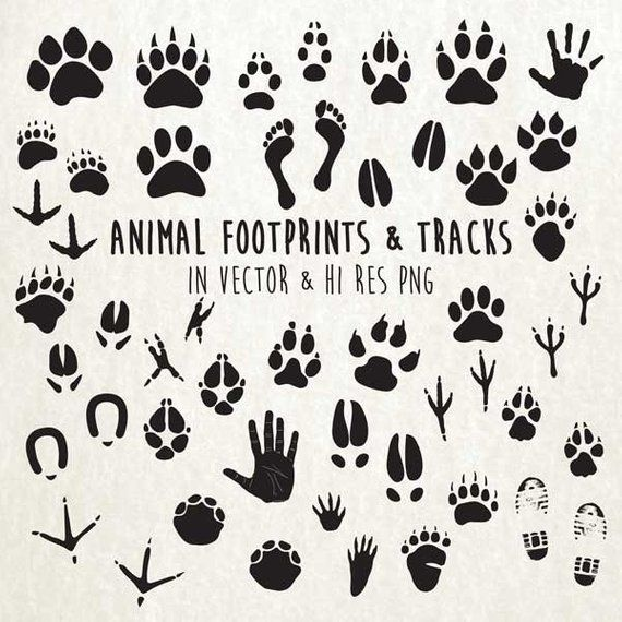 Wildlife tracks clipart graphic free library Animal Paw Print Clipart, Animal Tracks Clipart, Animal ... graphic free library