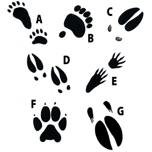 Woodland animal footprint clipart graphic library stock Animal Track Stamps & Replicas   Animal Footprint Products ... graphic library stock