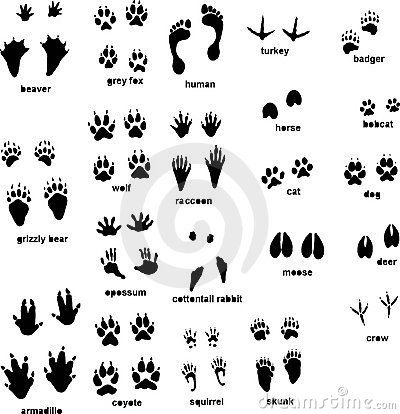 Woodland animal footprint clipart transparent download Wild Animal Footprints   Animal tracks with front and rear ... transparent download
