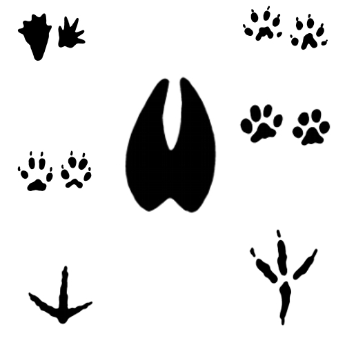 Woodland animal footprint clipart graphic transparent library Free Animal Footprints, Download Free Clip Art, Free Clip ... graphic transparent library