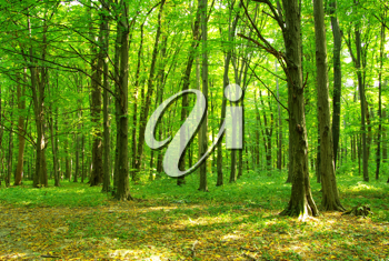 Woodland scenery clipart clipart library download Featured Nature/Scenic Clipart and Photos   Vital Imagery clipart library download