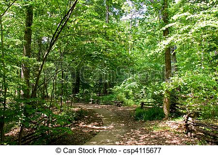Woodland trail clipart vector library Woodland Trail Through Green Forest vector library