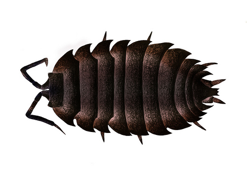 Woodlouse clipart image transparent library Woodlouse clipart 4 » Clipart Station image transparent library