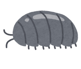 Woodlouse clipart image royalty free library Woodlouse clipart - 1 Woodlouse clip art image royalty free library