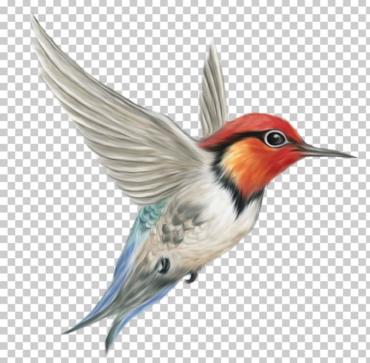 Woodpeckers flying clipart clip art library library Bird PNG, Clipart, Beak, Belted Kingfisher, Bird, Bird ... clip art library library