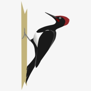 Woodpeckers flying clipart image library stock Woodpecker Clipart Foot - Woodpeckers Clip Art #686931 ... image library stock
