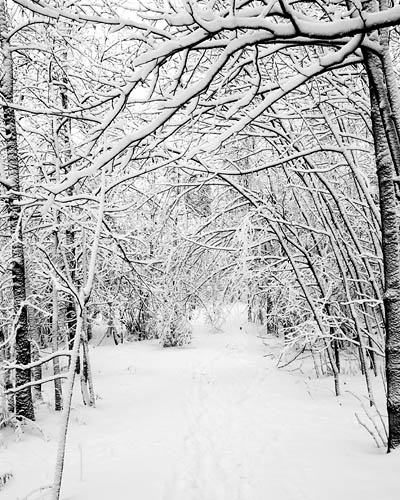 Woods with snow clipart drawing svg royalty free library Free Snowy Woods Cliparts, Download Free Clip Art, Free Clip ... svg royalty free library