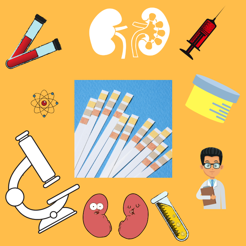 Chronic kidney disease clipart jpg royalty free Early Detection of CKD: What You Need to Know - World Kidney Day jpg royalty free