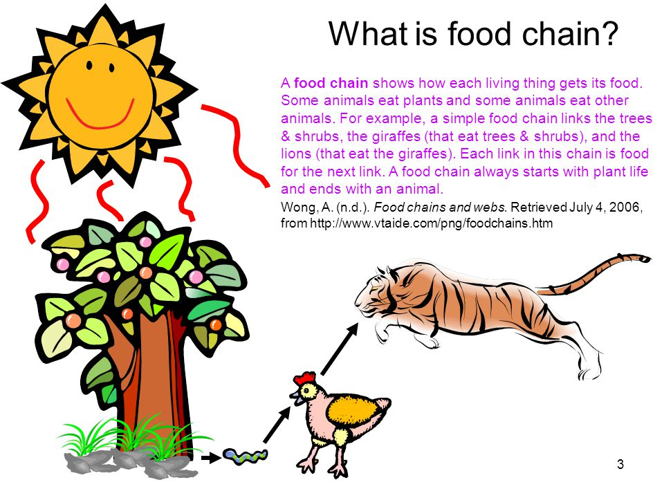 Www vtaide com clipart foodchains htm vector freeuse stock 1 Know more about food chain by David and Maria. 2 ... vector freeuse stock