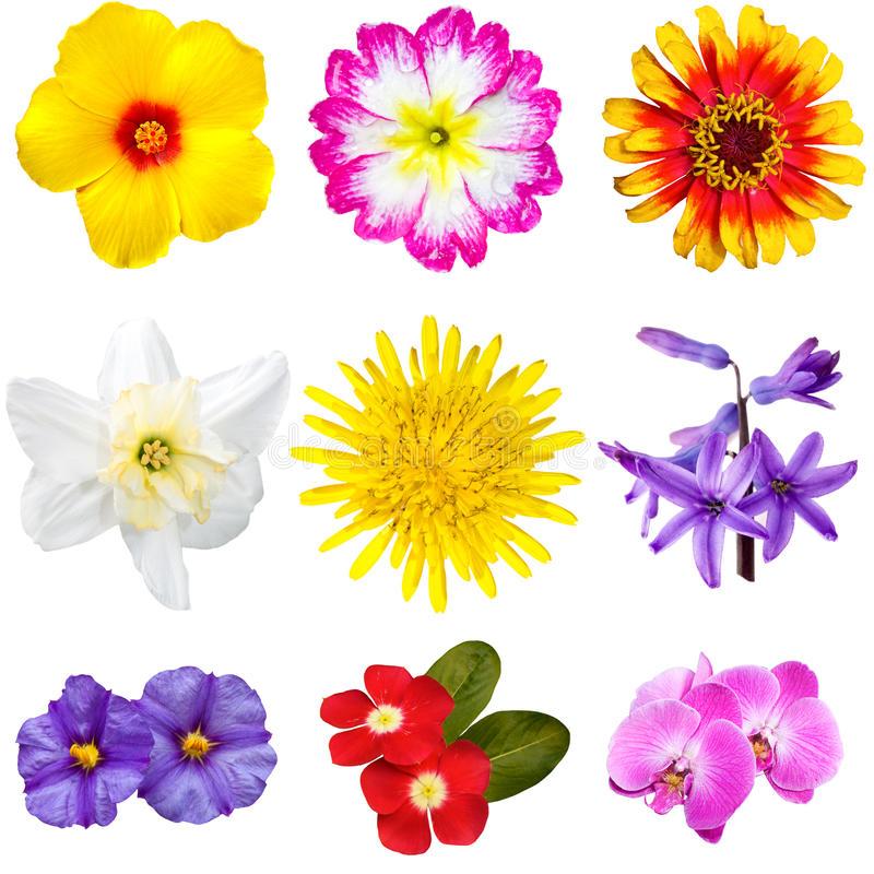 Wycinanki clipart svg download Kolorowe Kwiat Wycinanki Obraz Stock Z&322o&380onej Z ... svg download