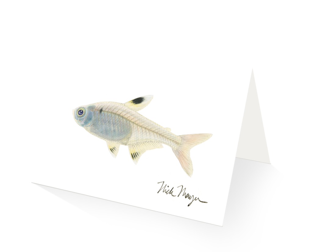 Xray fish clipart picture royalty free stock Picture Of An X Ray Fish - Blueridge Wallpapers picture royalty free stock
