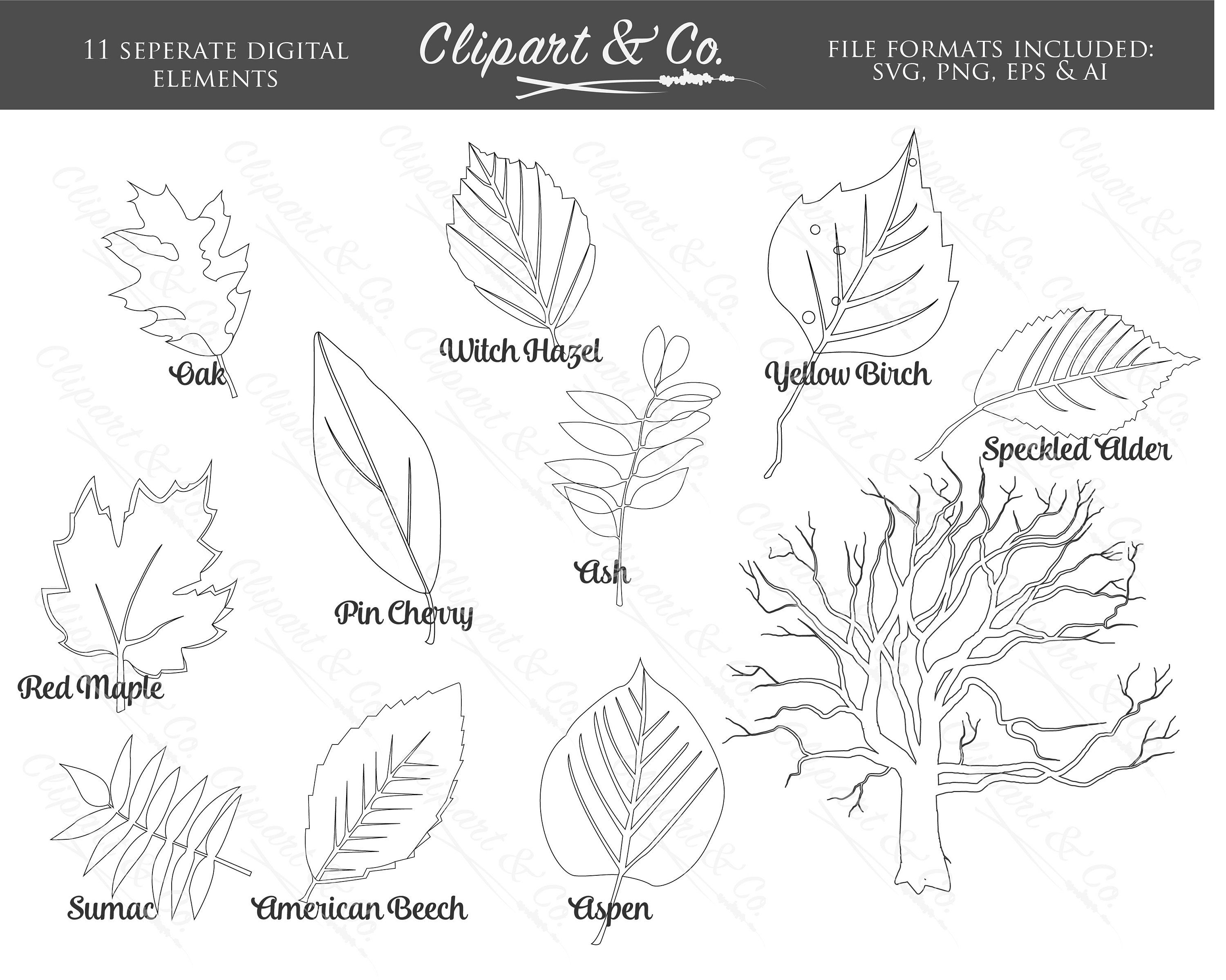 Yaprak vektor clipart vector black and white download Outline Fall Leaf Clipart and Tree Clip Art Digital Stamps ... vector black and white download