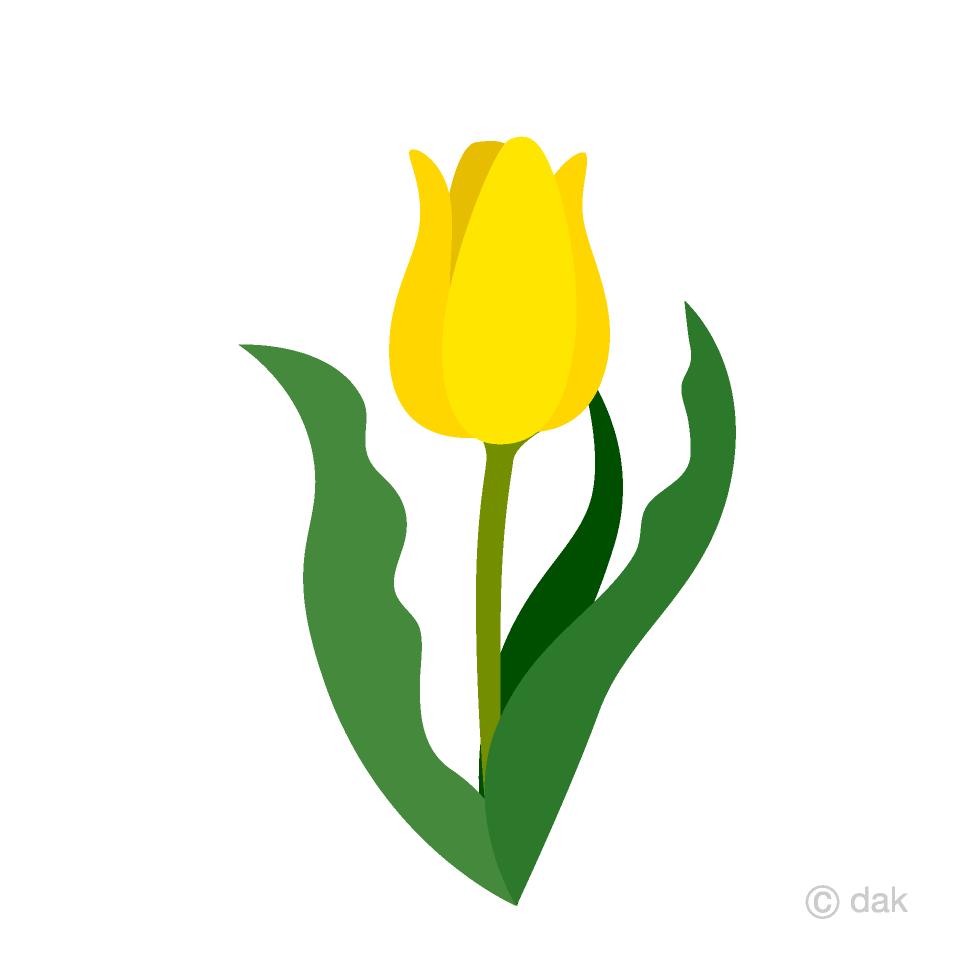 Yellow tulip clipart flower