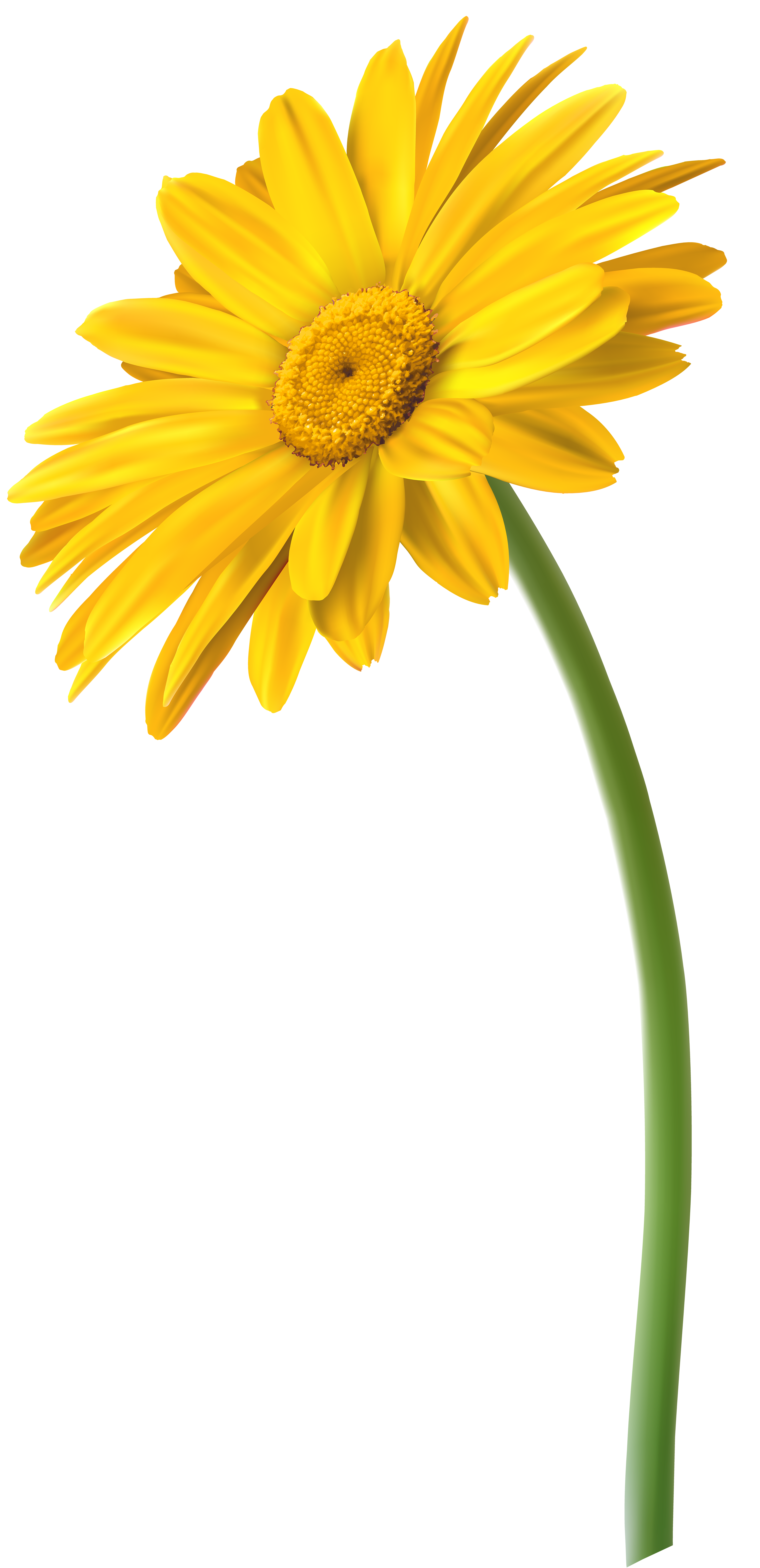 Yellow bell flower clipart picture royalty free download Yellow Gerbera Flower PNG Clip Art Image | Gallery Yopriceville ... picture royalty free download