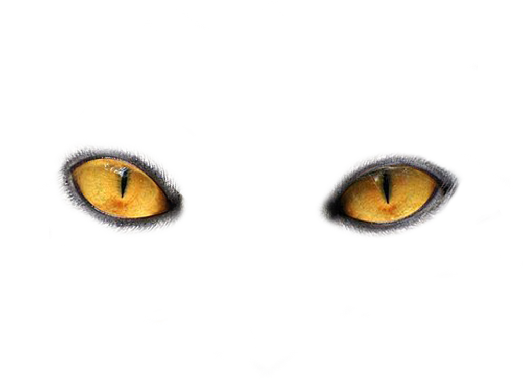 Yellow cat clipart no background black and white download Eyes PNG Image - PurePNG | Free transparent CC0 PNG Image Library black and white download