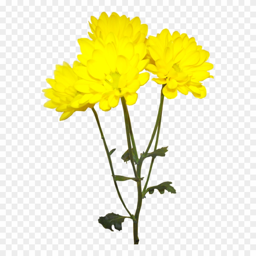 Yellow chrysanthemum clipart jpg library stock Image Royalty Free Library Forgetmenot Flowers ... jpg library stock