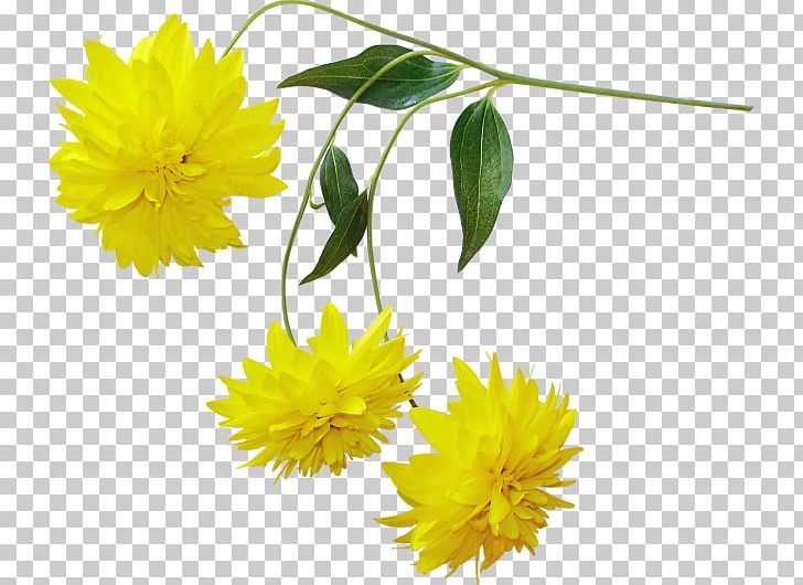 Yellow chrysanthemum clipart graphic download Yellow Chrysanthemum Flower PNG, Clipart, Calendula ... graphic download