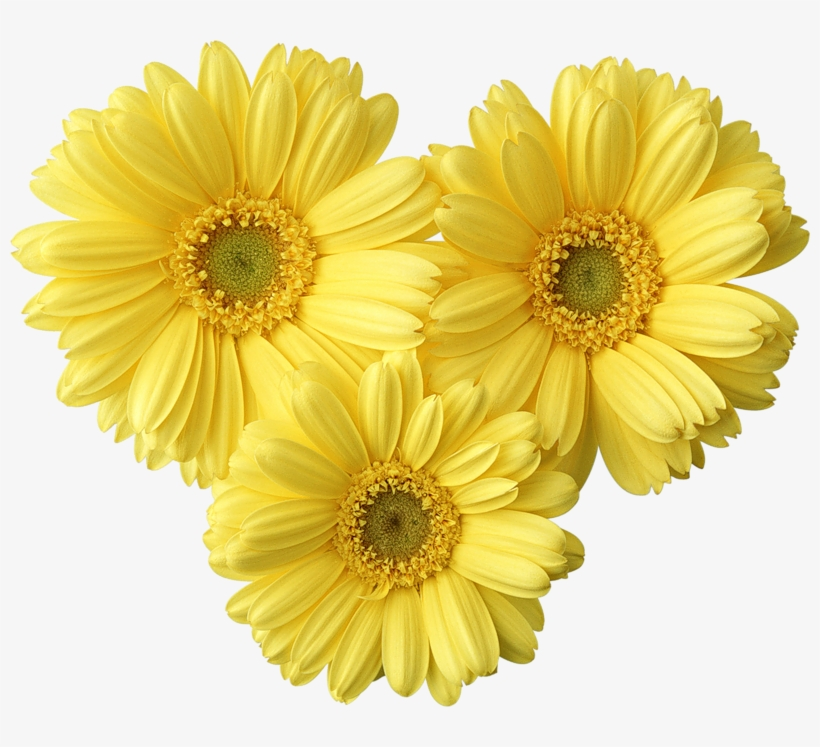Yellow daisy clipart clip art royalty free stock Yellow Daisies Clip Art Transparent PNG - 800x667 - Free ... clip art royalty free stock
