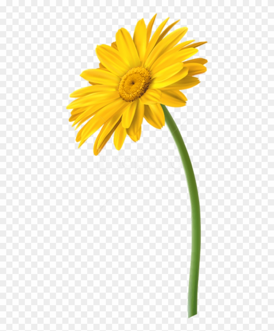 Yellow daisy clipart free image royalty free stock Free Png Yellow Gerbera Flower Png Images Transparent ... image royalty free stock