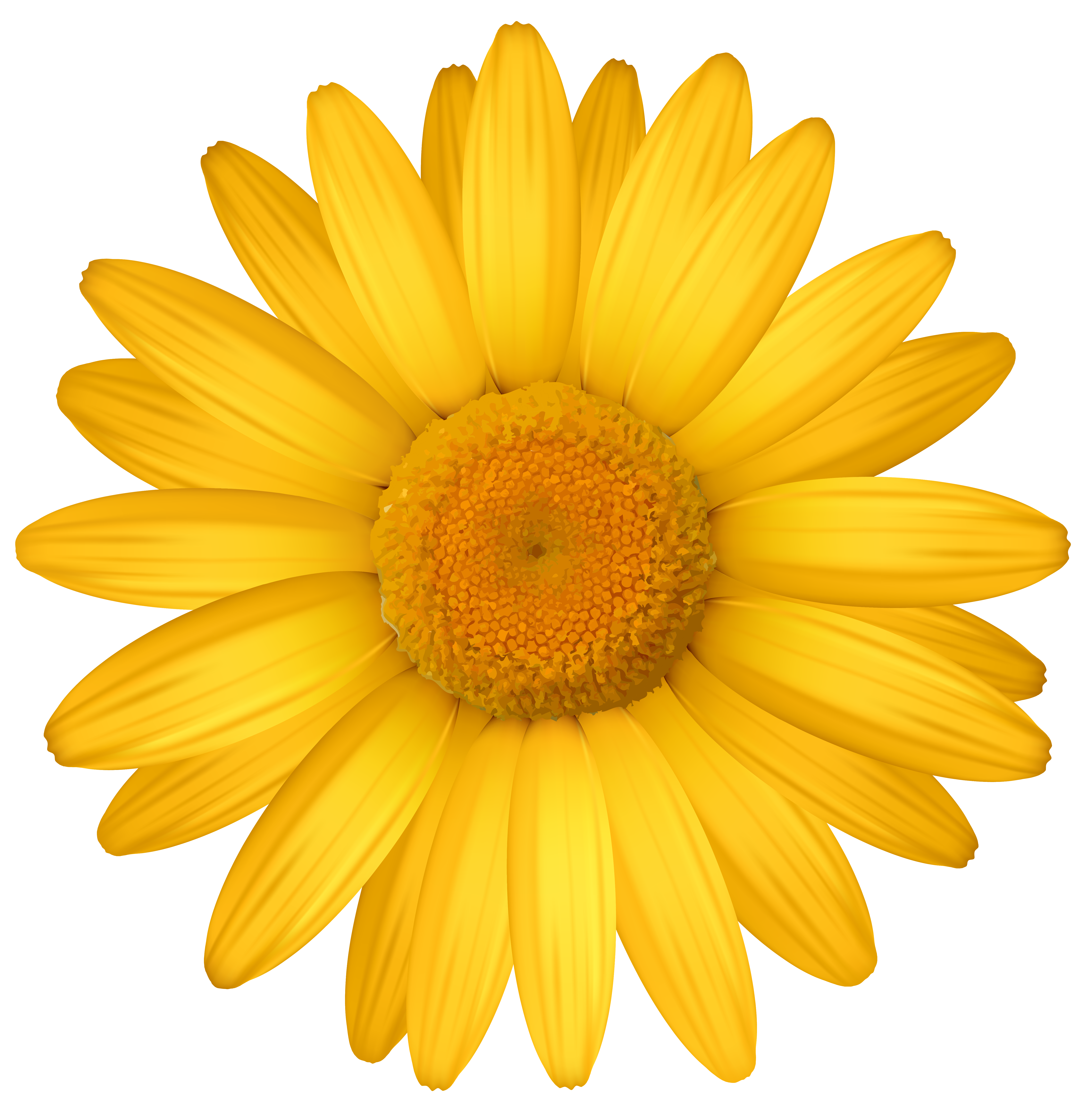 Yellow daisy clipart graphic black and white Yellow Daisy PNG Clipart Image | Gallery Yopriceville ... graphic black and white