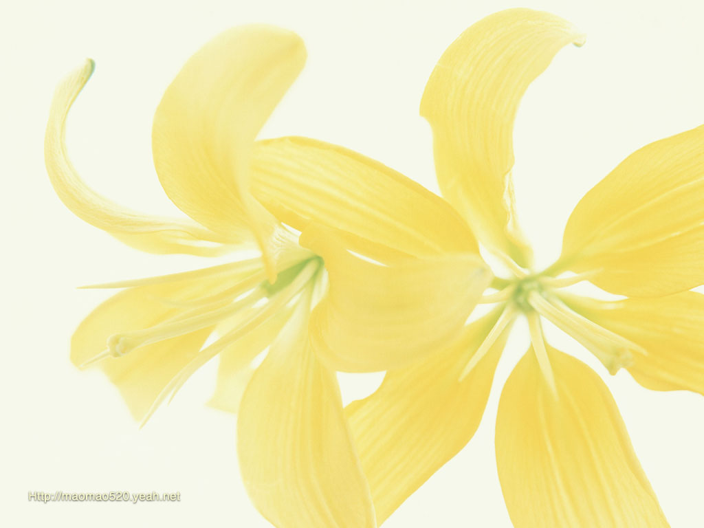 Yellow flower artwork picture freeuse Japanese Ikebana - Flower Art - Art floral 6 - wallcoo.net picture freeuse