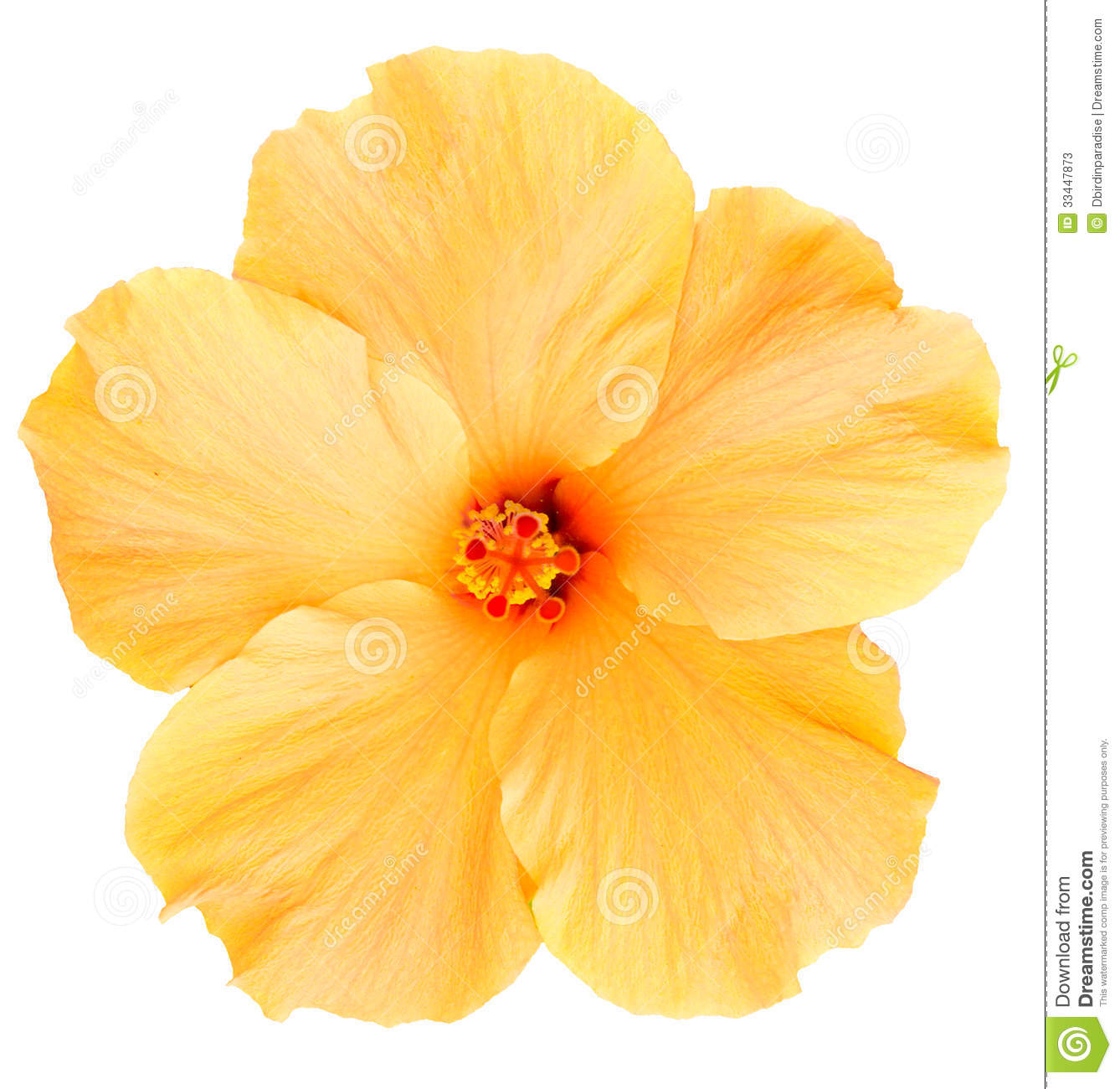 Yellow flower clipart png clip Yellow Flower Clip Art Png Orange And Yellow Flowers Clip Art ... clip