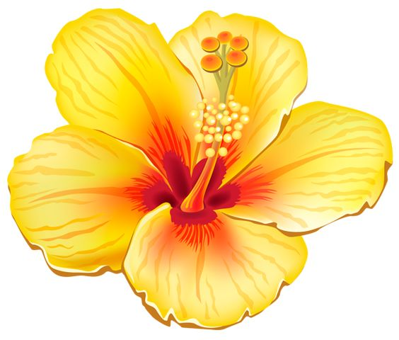 Yellow flower clipart png clip art black and white download Yellow Exotic Flower PNG Clipart Picture | cris | Pinterest ... clip art black and white download