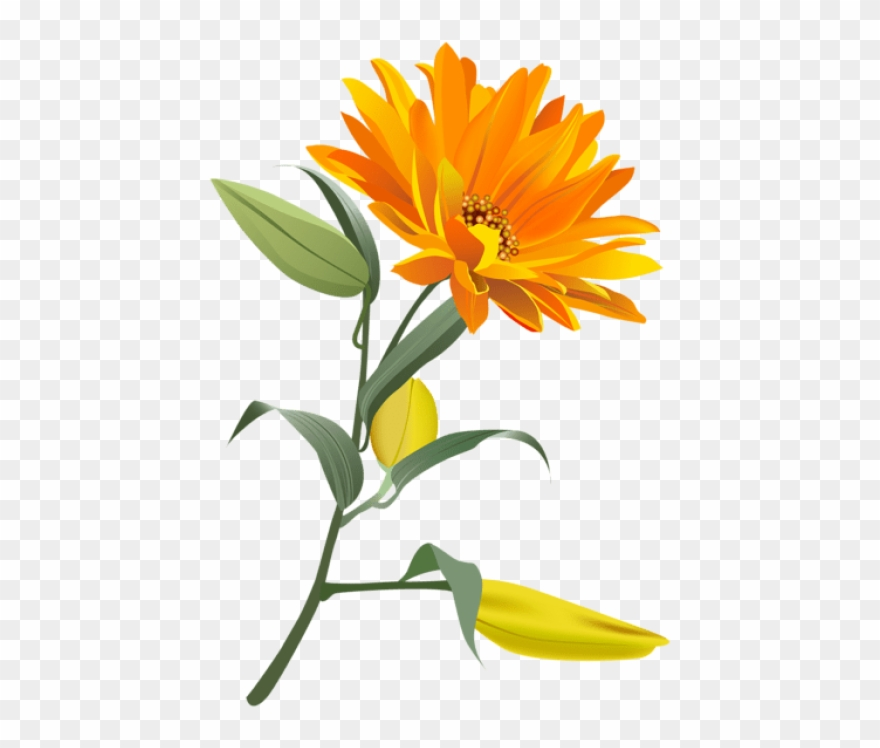 Yellow flower no background clipart graphic transparent stock Free Png Download Orange Flower Png Images Background ... graphic transparent stock
