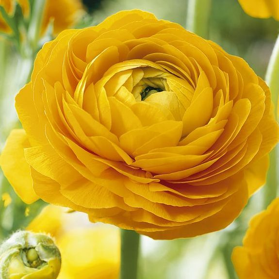 Yellow flowers image clipart royalty free library 17 Best ideas about Yellow Flowers on Pinterest | Roses, Flowers ... clipart royalty free library