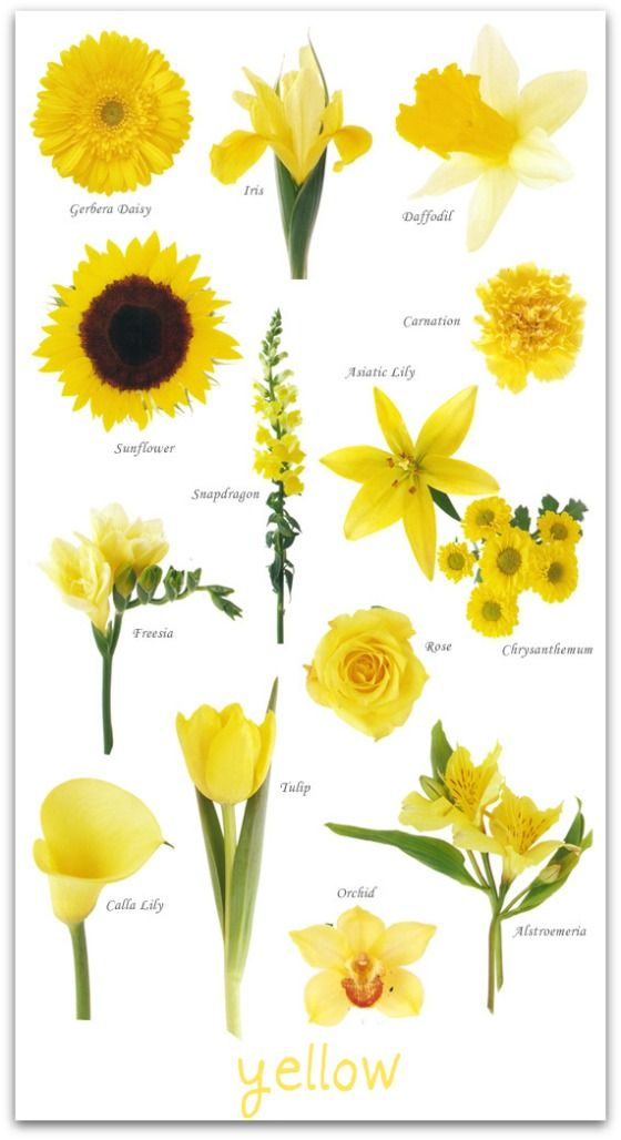 Yellow flowers image svg black and white 17 Best ideas about Yellow Flowers on Pinterest | Roses, Flowers ... svg black and white