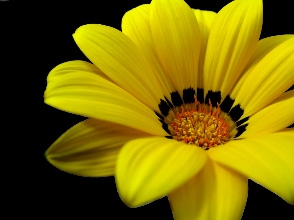 Yellow flowers image clip freeuse Yellow flowers picture - ClipartFest clip freeuse