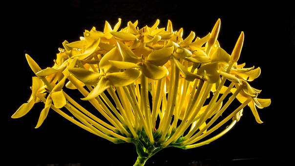 Yellow flowers image graphic royalty free Yellow, Flowers - Free images on Pixabay graphic royalty free