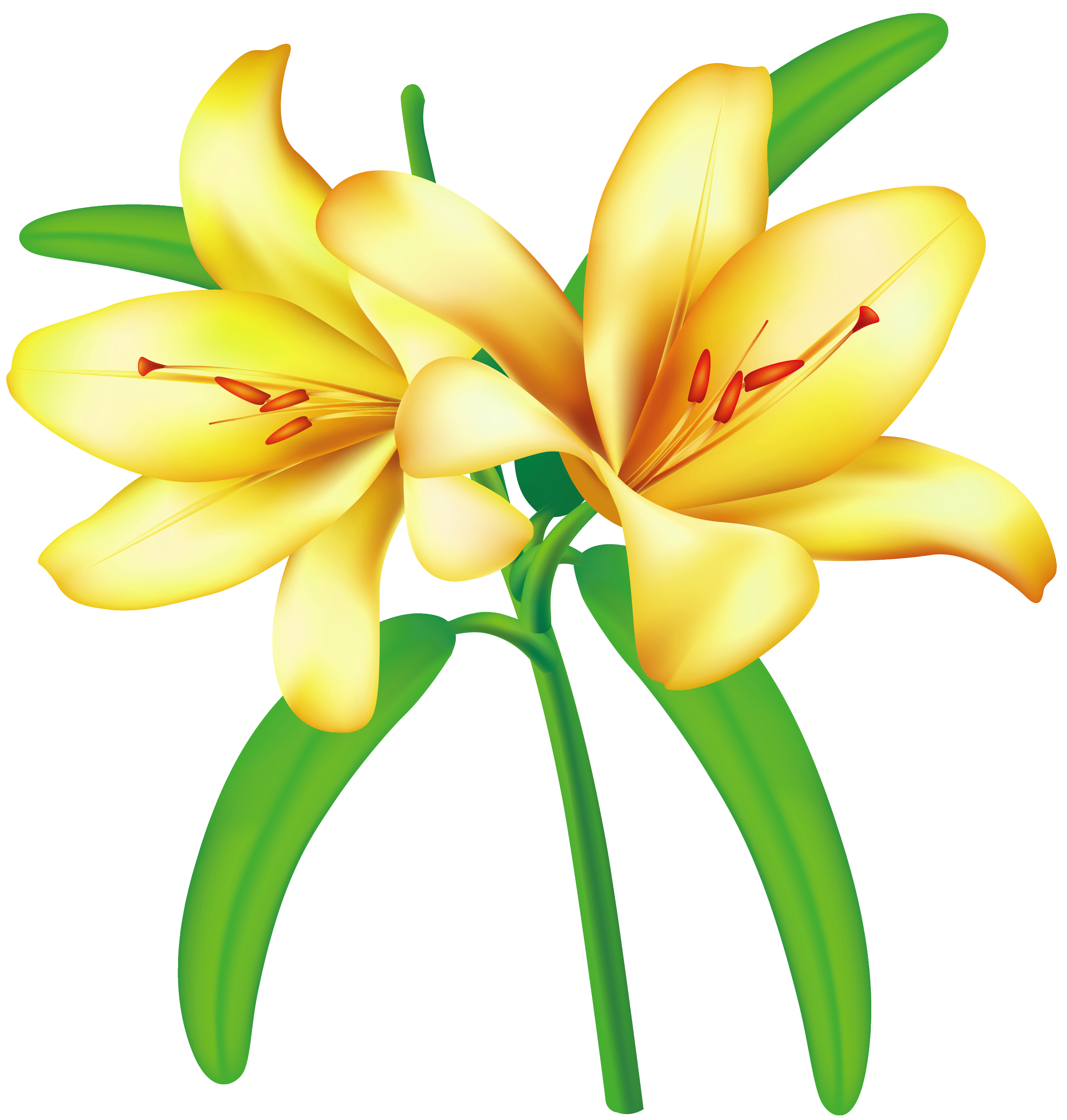 Yellow jasmine clipart picture royalty free download Yellow Lilium PNG Clipart Picture | Gallery Yopriceville ... picture royalty free download