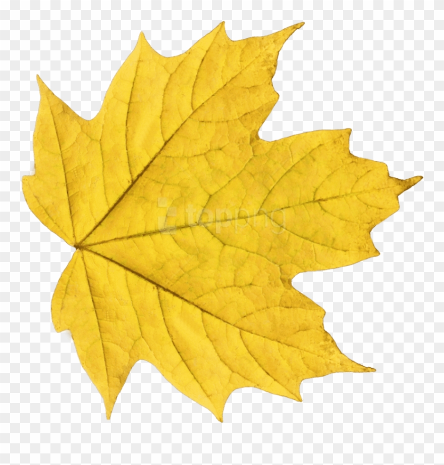 Yellow leaves clipart image download Free Png Download Autumn Leaves Clipart Png Photo Png ... image download