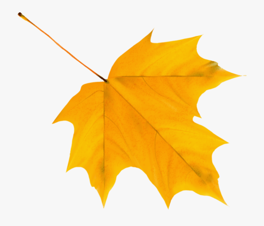 Yellow leaves clipart picture transparent stock Autumn Leaf Clipart - Autumn Leaves Clipart Png #754639 ... picture transparent stock