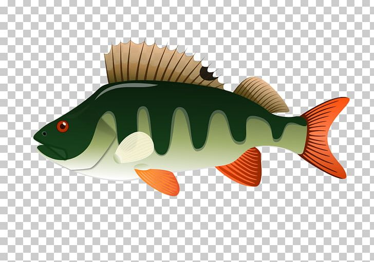 Yellow perch clipart svg freeuse Northern Pike Yellow Perch PNG, Clipart, Animals, Bony Fish ... svg freeuse