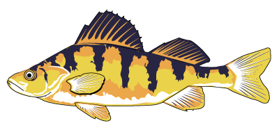Yellow perch clipart svg black and white library We Know Ponds™ | Fish Day Pre-Order Form svg black and white library