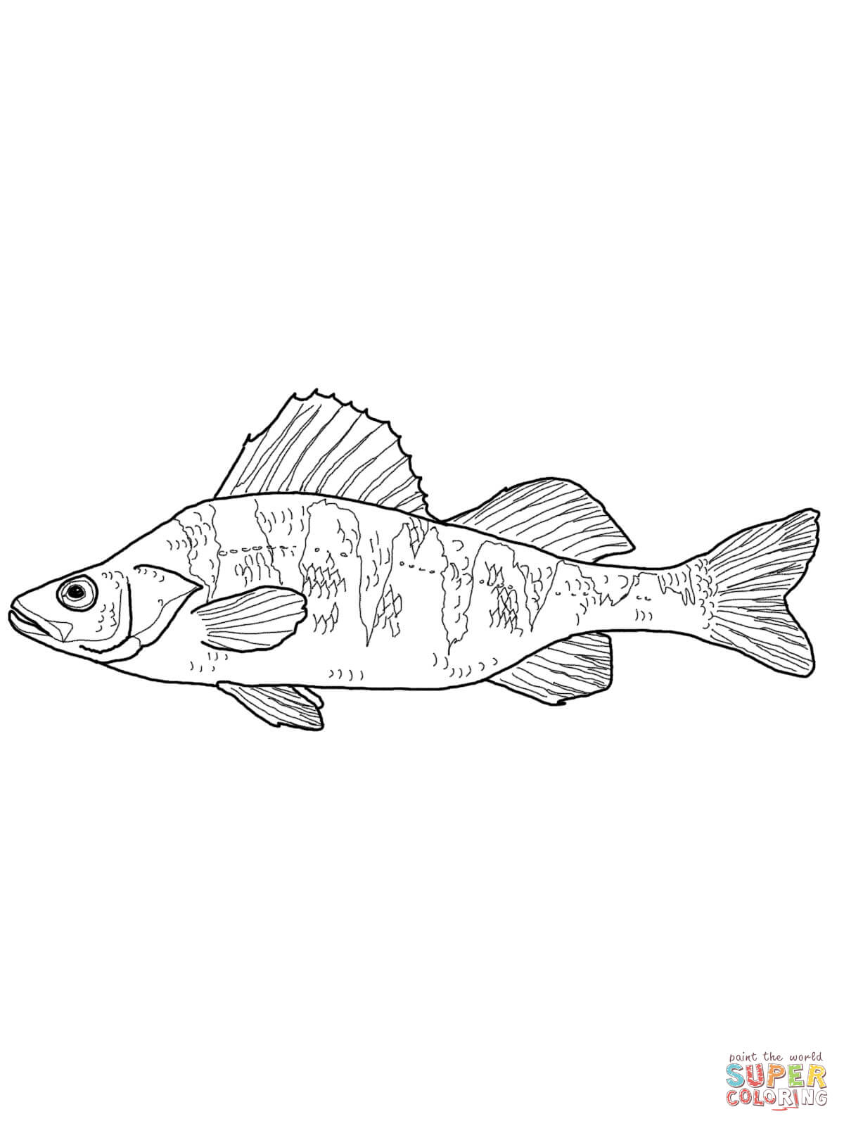 Yellow perch clipart banner freeuse download Perch coloring pages | Free Coloring Pages banner freeuse download