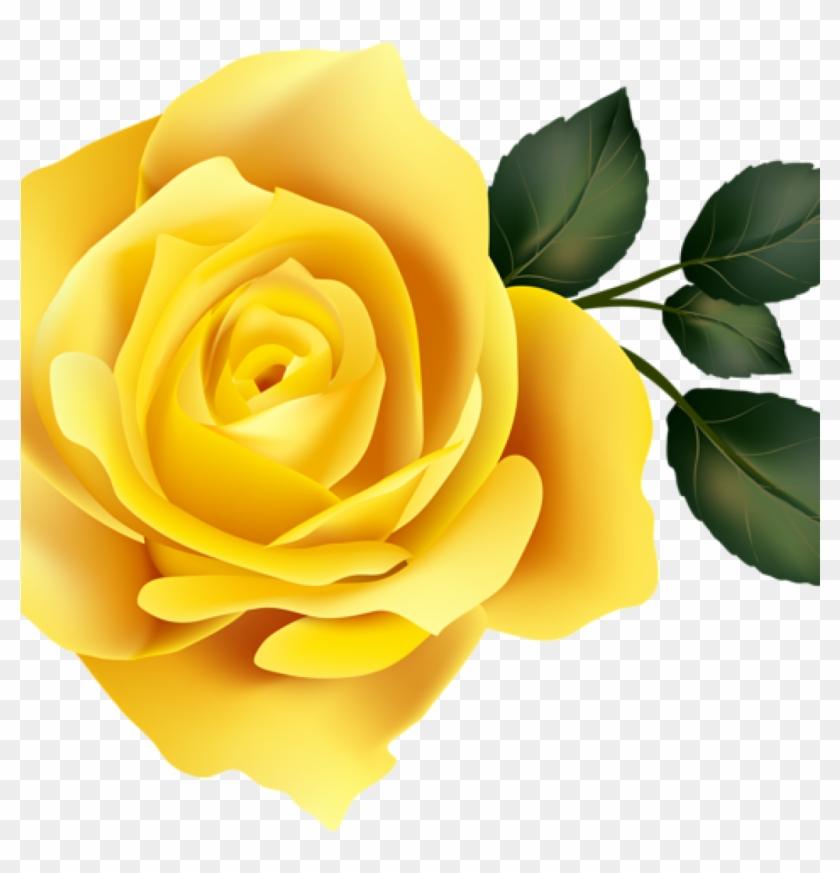Yellow rose clipart png jpg transparent stock Yellow Rose Clipart 15 Rose Clipart Yellow Rose For - Rose ... jpg transparent stock
